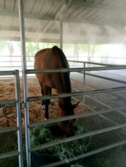 horse stable misting