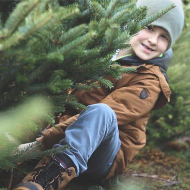 STANDARD_christmas_trees_011.jpg