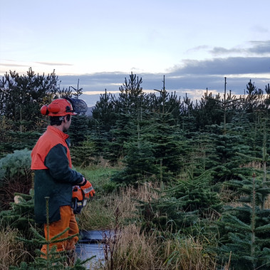 STANDARD_christmas_trees_004.jpg