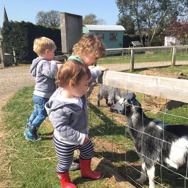 STANDARD_goats.jpg