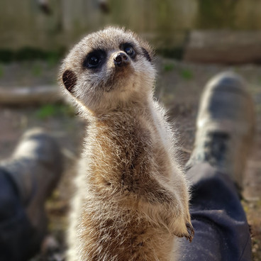 Lots of animals to see including meerkats