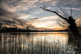 Natural Shoreline Buffers
