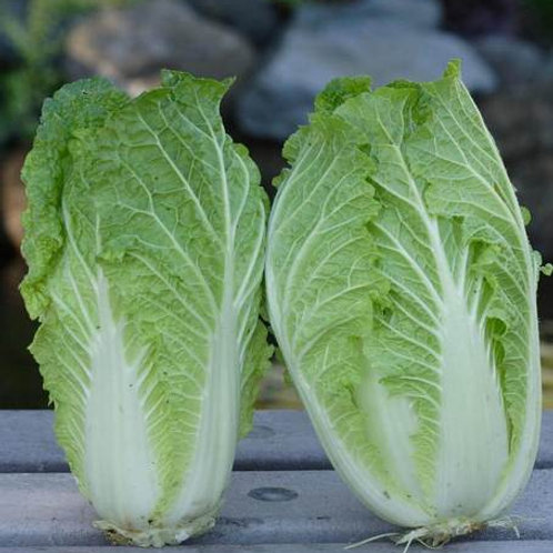 Sui Choi China Express Cabbages