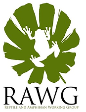 News - RAWG