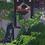 Thumbnail: Seagull Island