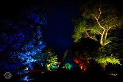 Illuminations de la Forêt - le Touquet