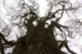 Tree of Articles.jpg