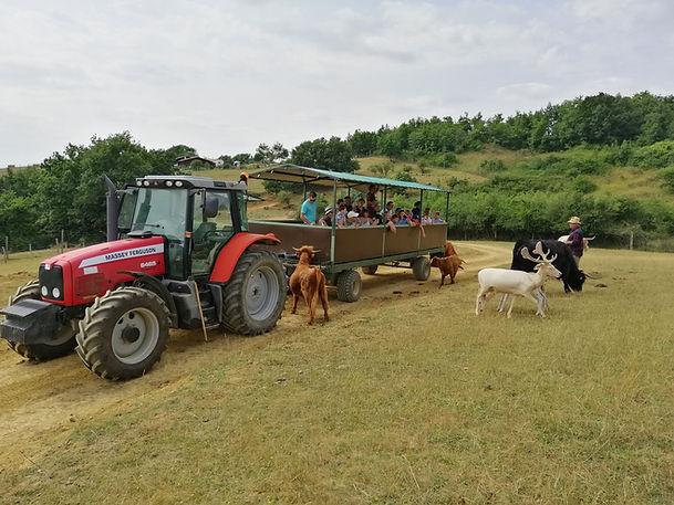 IMG tracteurs highlands.jpg