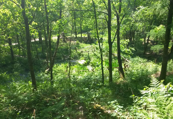 The Forest site