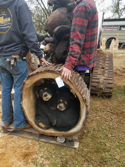 Chainsaw carved Bear in log