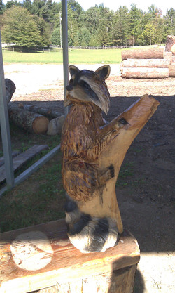 Alonzo Montoya Chainsaw Carved Raccoon.jpg