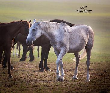 horsew.jpg