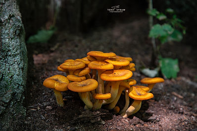 orangemushrooms-2w.jpg