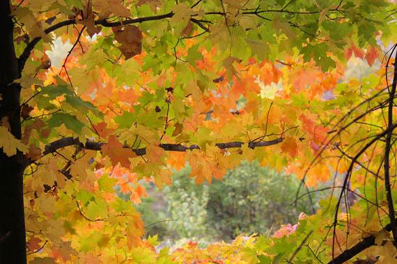 台原森林公園の秋