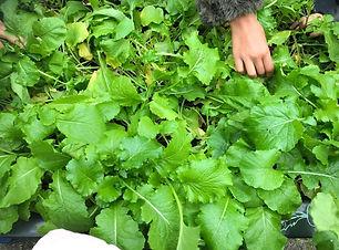 Vegetable garden Parlevinker 2.jpeg