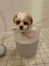 Bailey's first bath.jpg