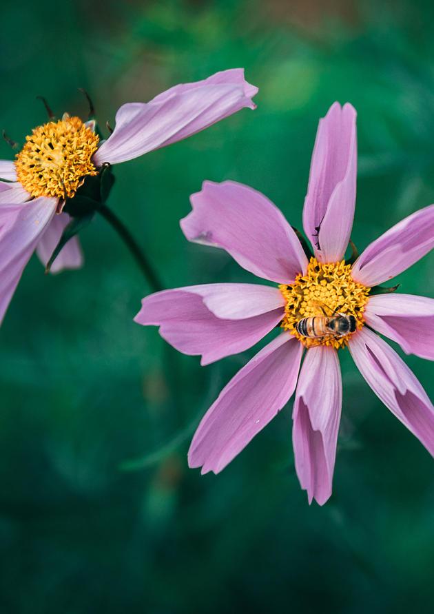FlowerField17(1of1).jpg