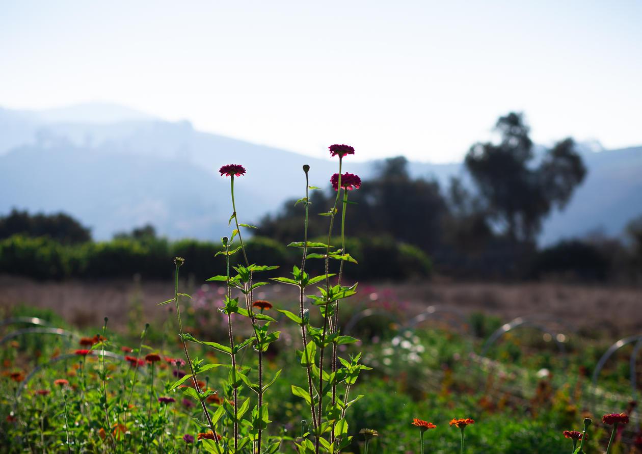FlowerFieldOctober3(1of1)2.jpg