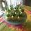 Thumbnail: Cake Pops (intricate design)