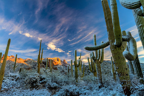 Cacti Scene