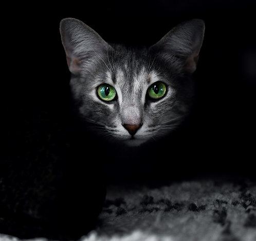 Green Eyed Kitty