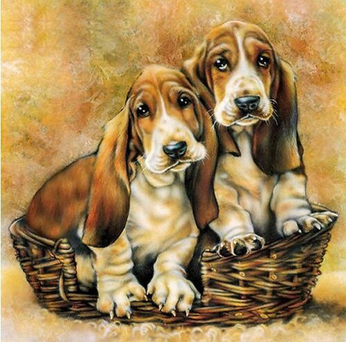 Hound puppies