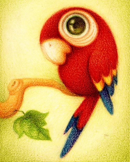 Big Eyed Parrot