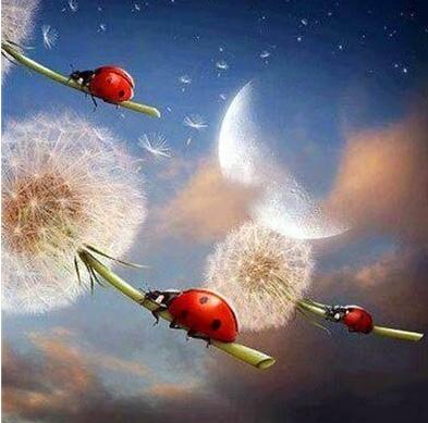 Leisurely Ladybugs