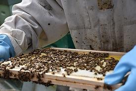 Du miel dans l'assiette