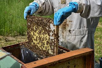du miel dans assiette_01.jpg