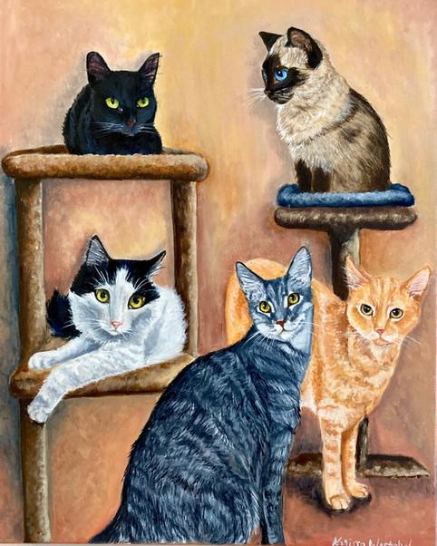5 Cat Fancy
