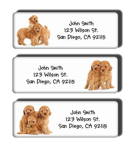 Apricot Toy Poodle Labels
