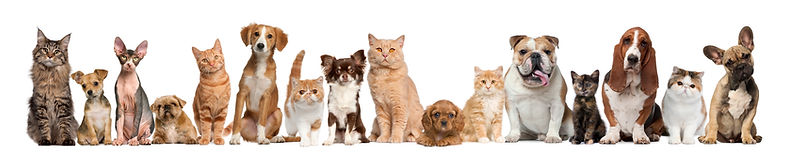 dogs and cats 3.jpg