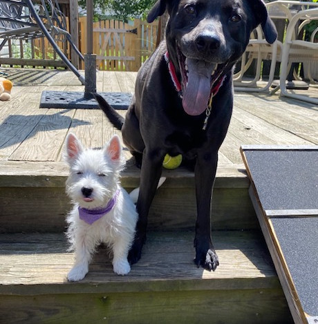 SoCo Dog Walkers have been caring for my pups for three years and we love them!