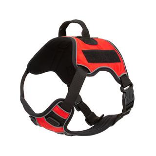 Pet leash product photography