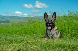 Mya the Wonder Dog