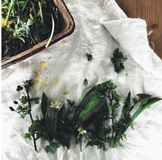 Spring Foraging, Wild Food & Hedgerow Remedies - POSTPONED