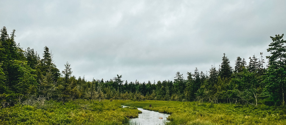 How to Spend 24 Hours in Acadia National Park