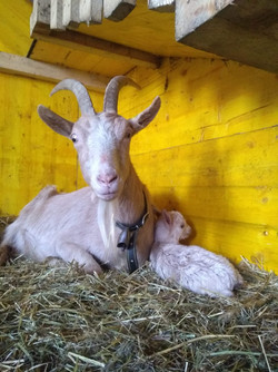 Maman et petit timide