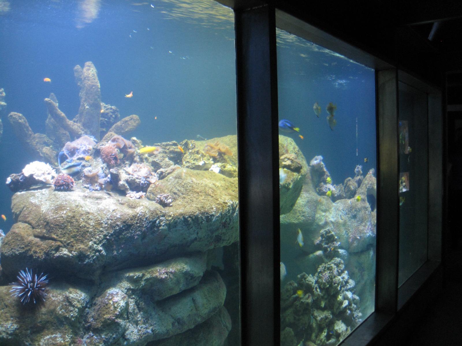 8. aquarium.JPG