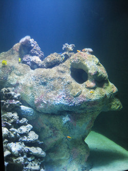 9. aquarium_edited.JPG