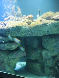 5. aquarium_edited.JPG