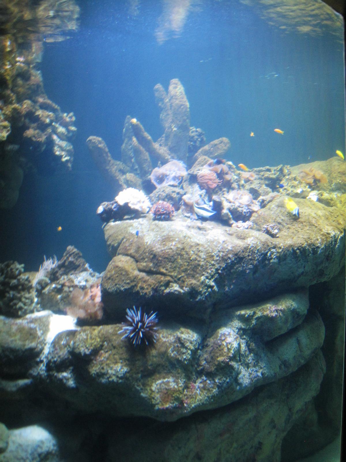 7. aquarium_edited.JPG