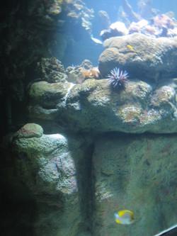 3. aquarium_edited.JPG