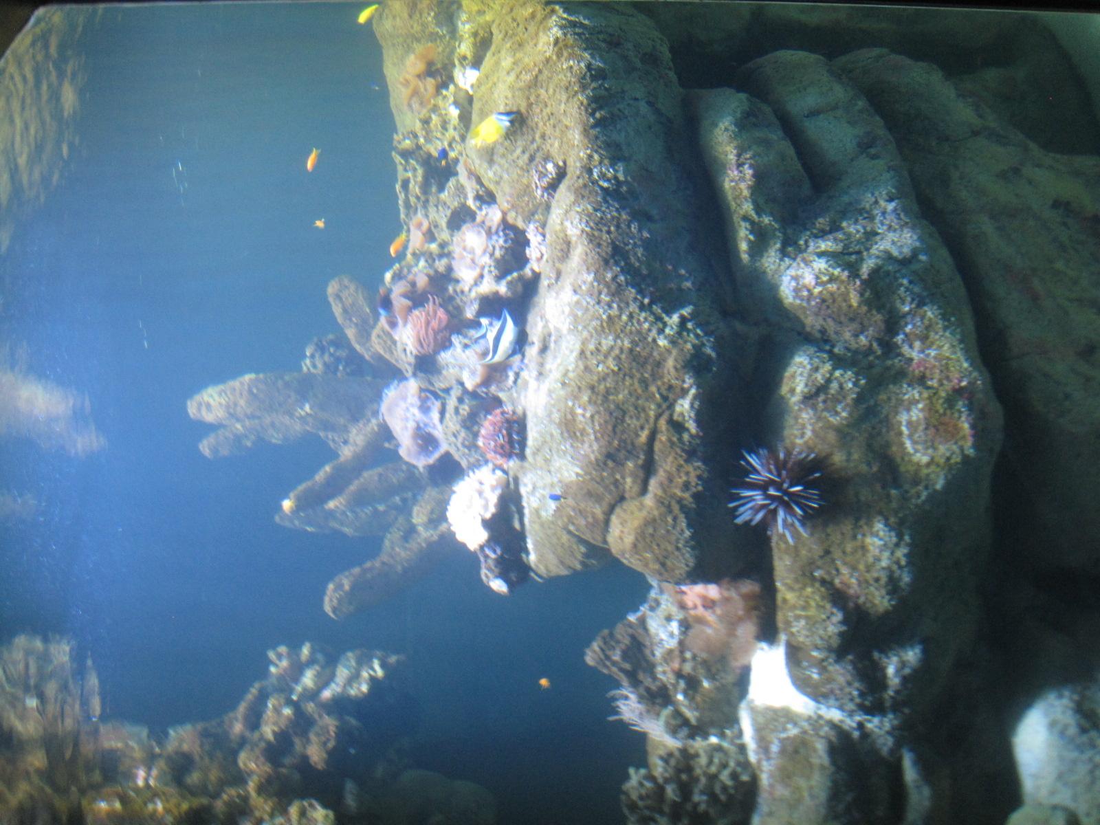 7. aquarium.JPG