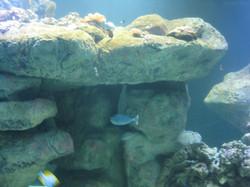 4. aquarium.JPG