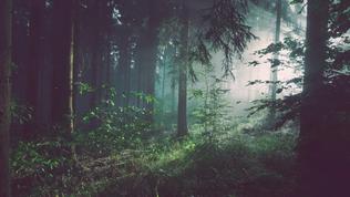 【メディア掲載】私と社会と自然―人と地球をつなぐ、エコロジカルな態度(千葉ウシノヒロバ)