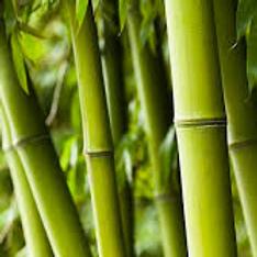 Bamboe Exfoliant  50g   Cabine product