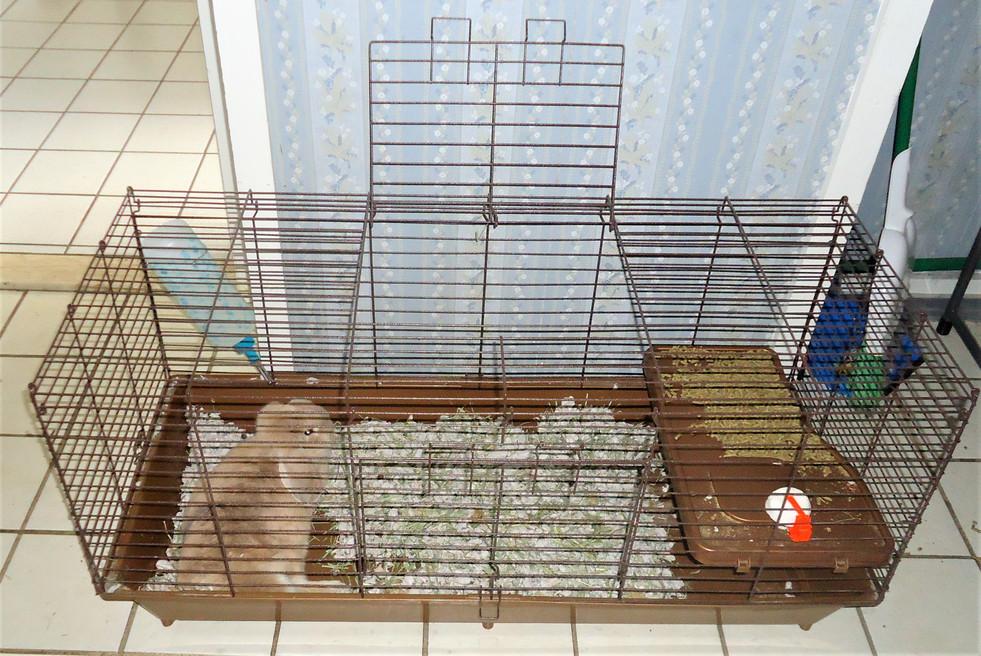 Every home a pet.jpg