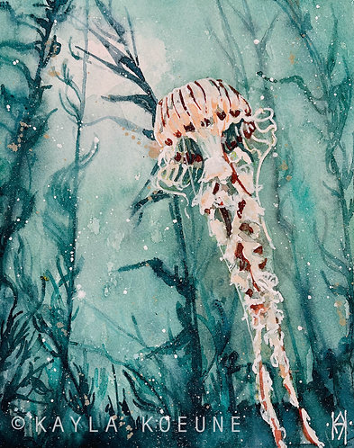 Compass Jellyfish Fine Art Prints